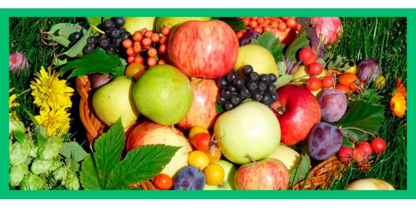 Ранние овощи и фрукты – причина кишечных инфекций. Что делать?