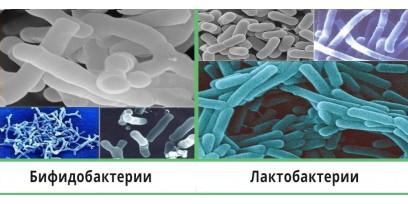 Лакто- и бифидобактерии в составе Лабицида S4