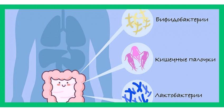 Иммунитет и кишечная микрофлора: где связь?